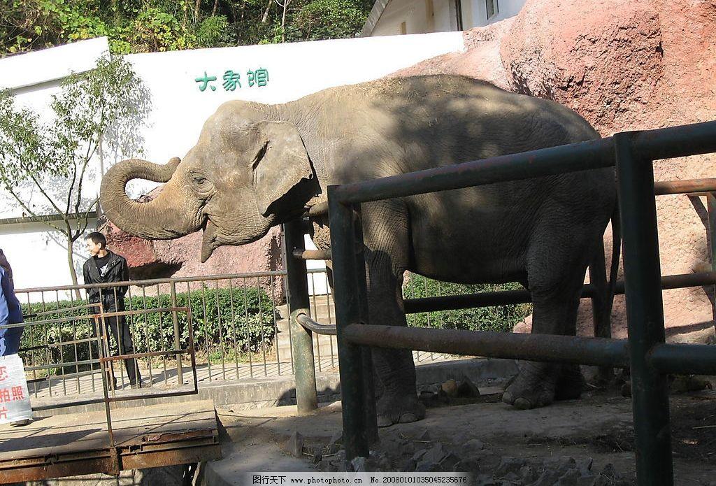 大象 生物世界 野生动物 摄影图库 180 jpg