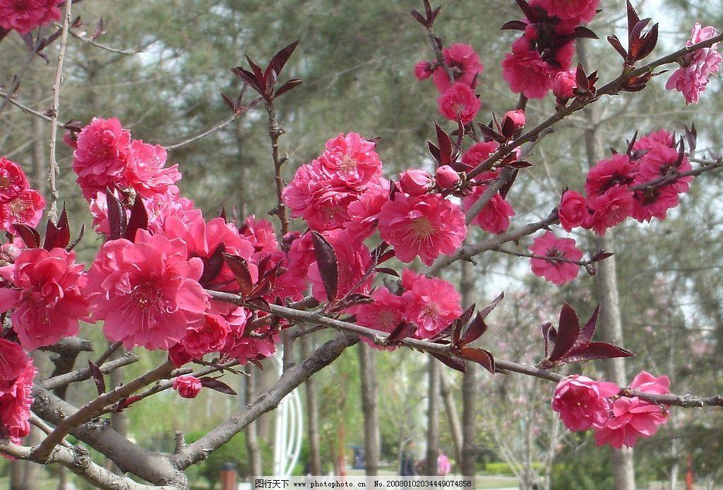 自然景观 春天景色 山水风景 摄影图库 72 jpg