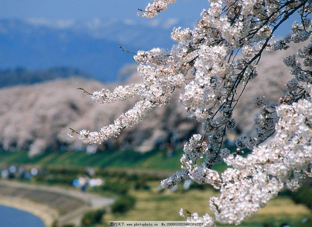 春暖花开 花朵春天桃花树枝 自然景观 自然风景 摄影图库 350 jpg