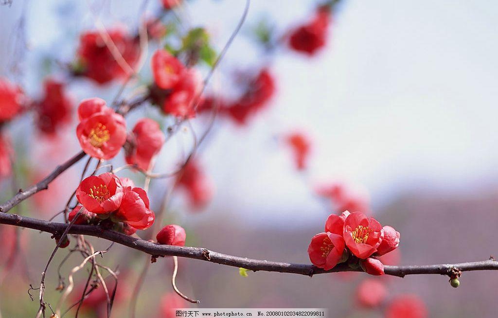 春暖花开图片,花春天 摄影图库-图行天下图库
