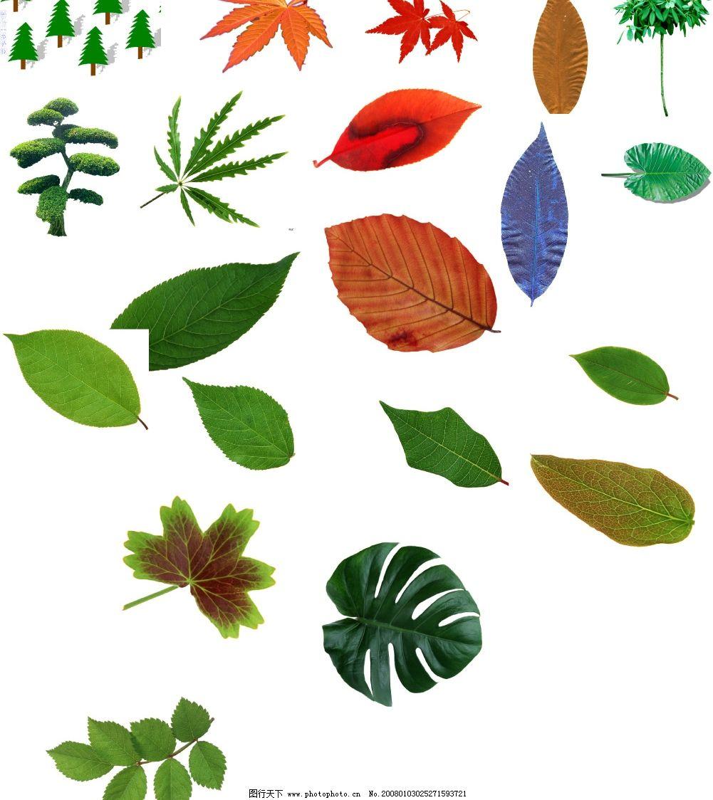 设计图库 生物世界 树木树叶    上传: 2008-1-3 大小: 7.