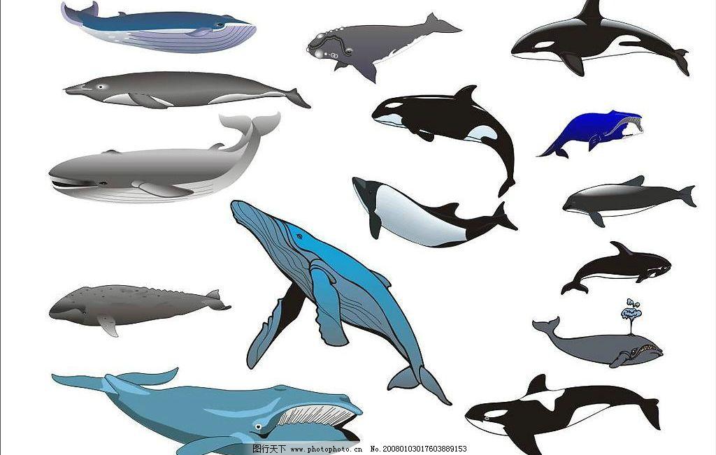精选coreldarw海洋生物矢量图—鲸鱼图片