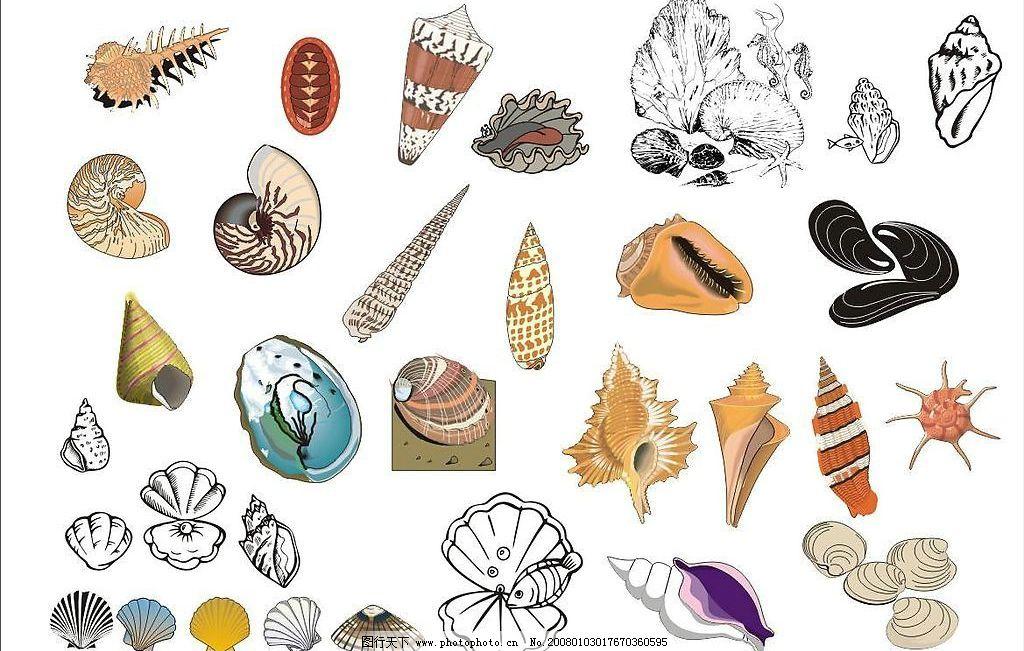 精选coreldarw海洋生物矢量图-海螺,贝壳图片