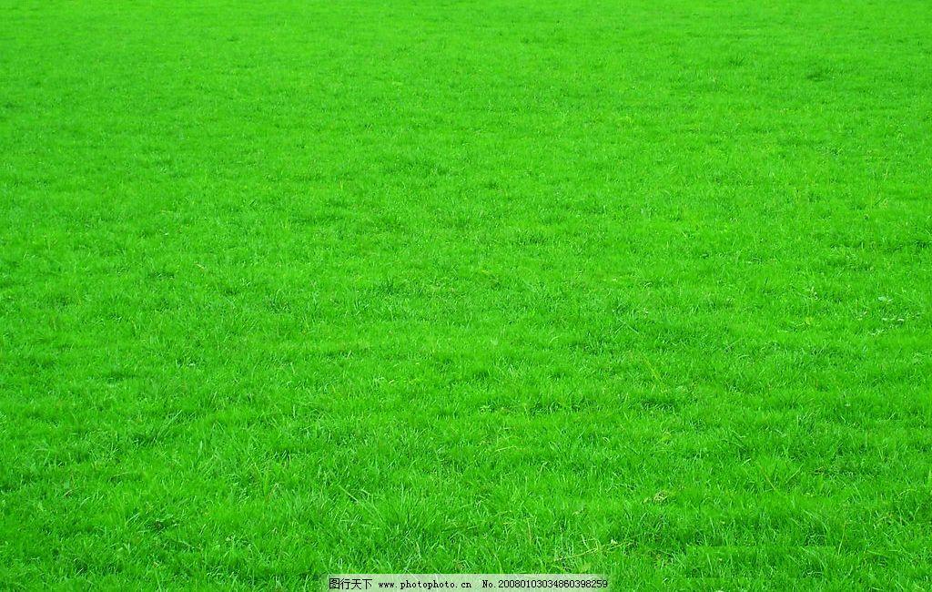 绿色壁纸图片-绿色护眼图片|绿色护眼图片手机壁纸|卓面壁纸图片|手机