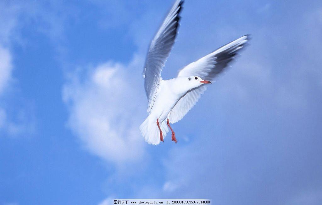 飞 鸟图片