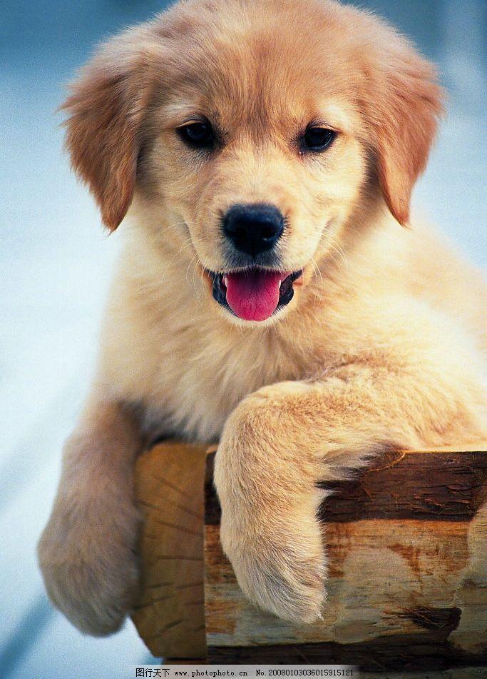 可爱狗狗2图片