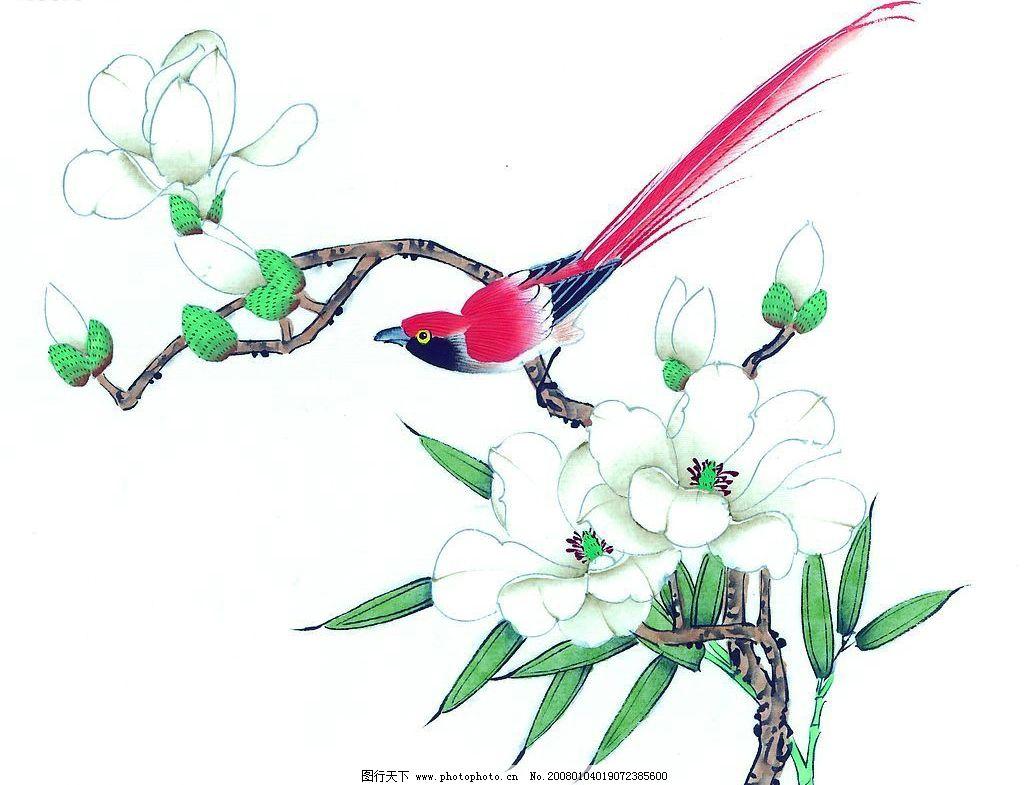 国画花鸟图片简单