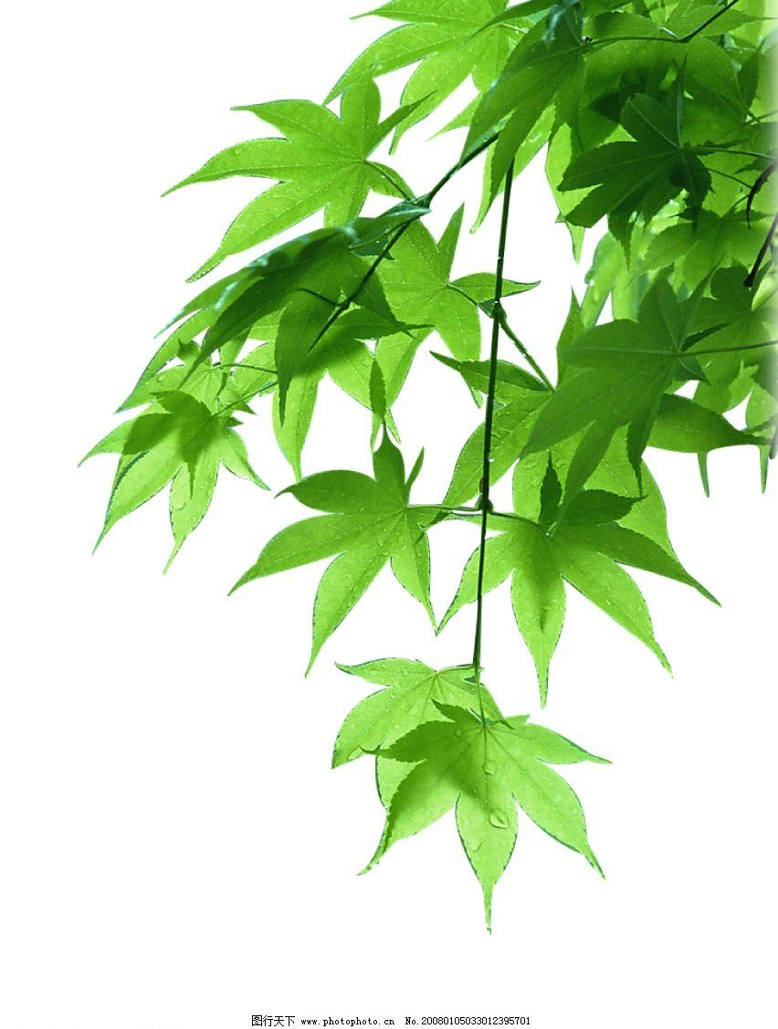 背景 壁纸 风景 绿色 绿叶 盆景 盆栽 树叶 植物 桌面 852_1127 竖版