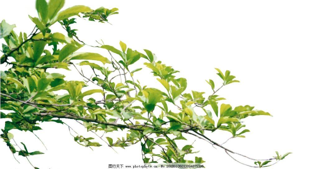 带花的树枝简笔画