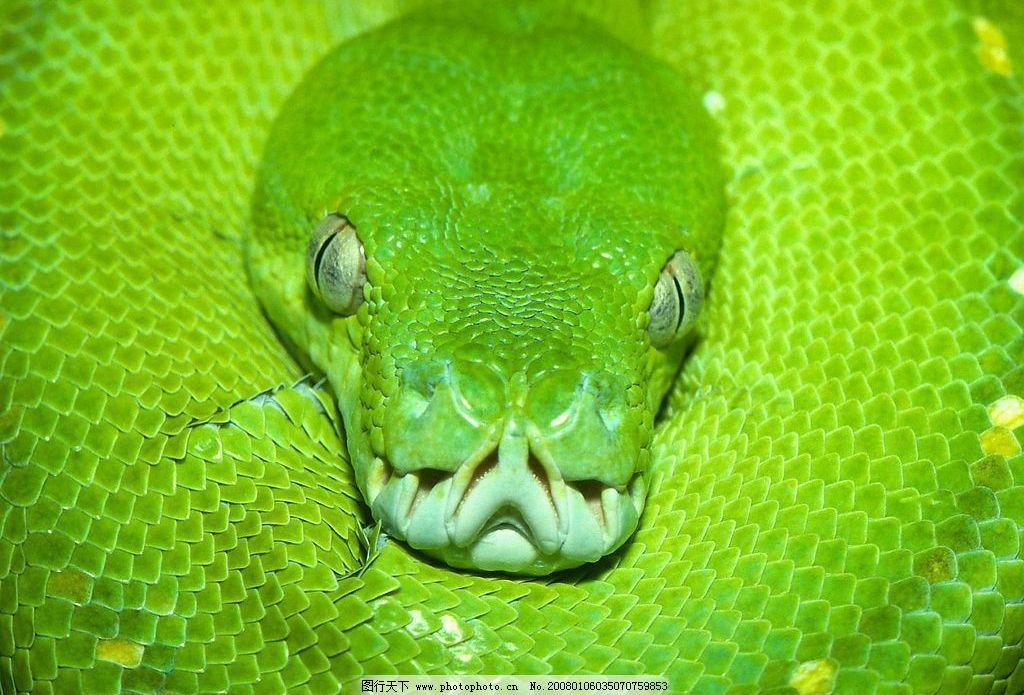蛇图 冷血动物 摄影 写真 危险动物 生物世界 野生动物 摄影图库