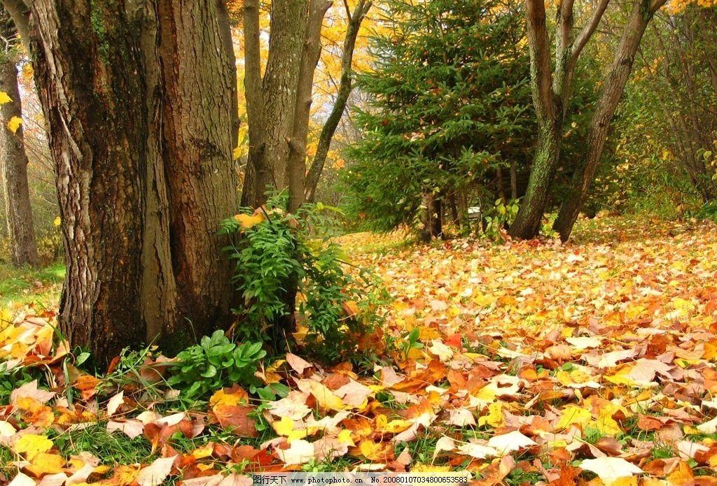 秋天落叶图片图片