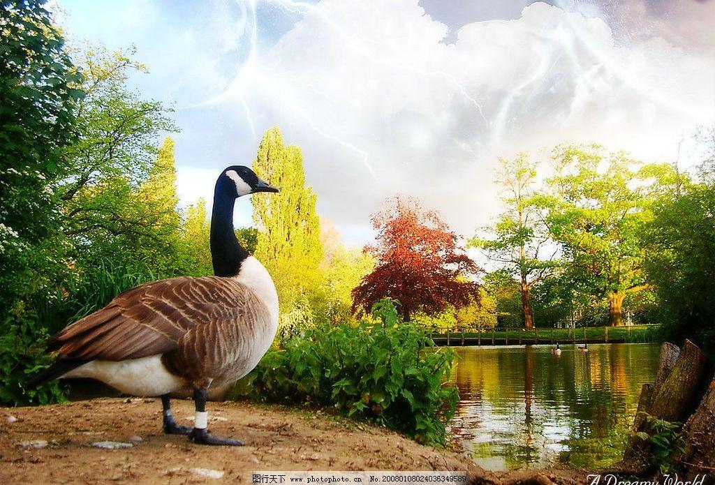 唯美风景 高像素 自然 风光 景观 自然景观 自然风光 高像素风景 设计