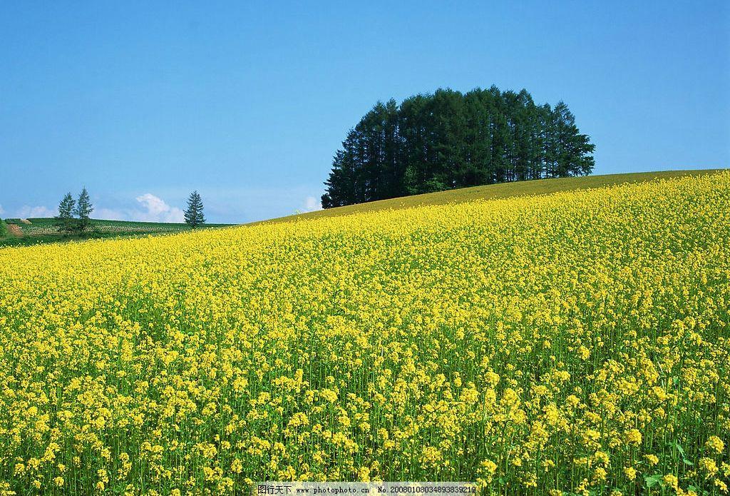 美丽景物 自然景观 自然风景 摄影图库 350 jpg