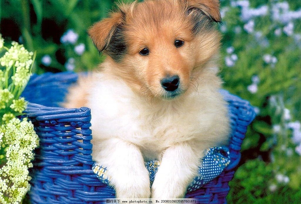 可爱的小动物 小猫 小狗