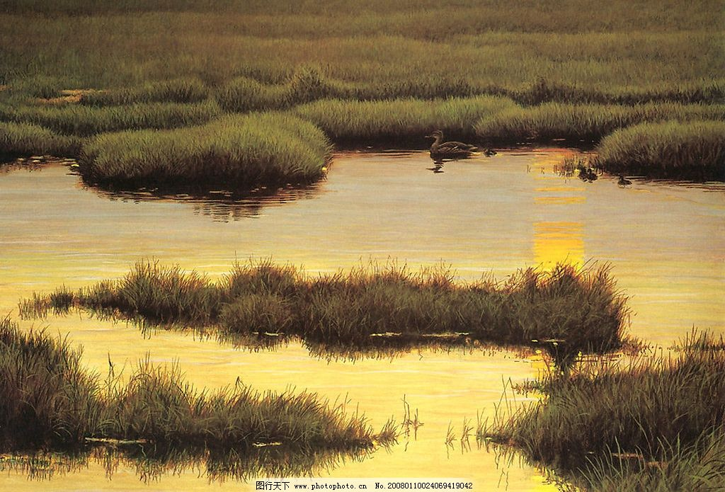 湿地 水 草地 自然景观 自然风光 设计图库 300 jpg