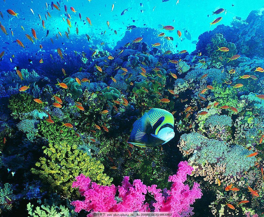 海底鱼 海底风景 生物世界 海洋生物 鱼 摄影图库 137 jpg