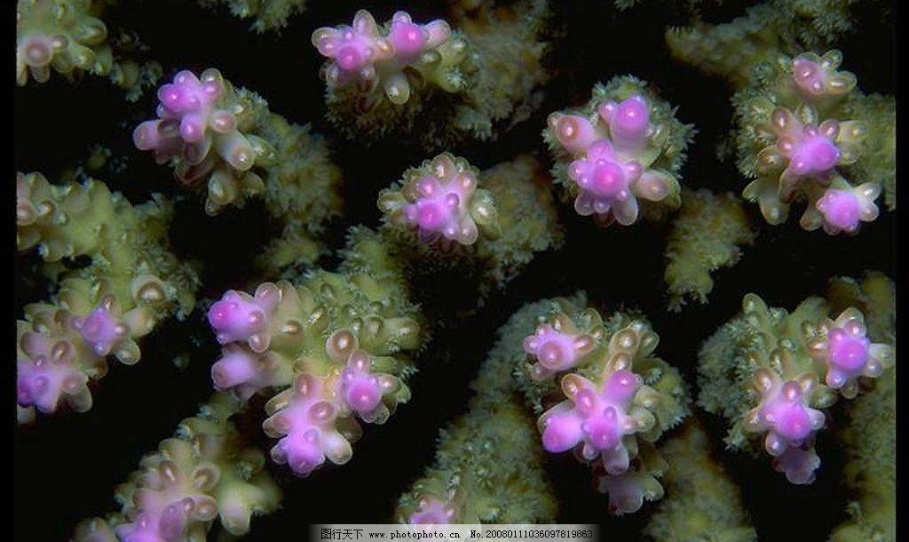 海底植物 生物世界 其他生物