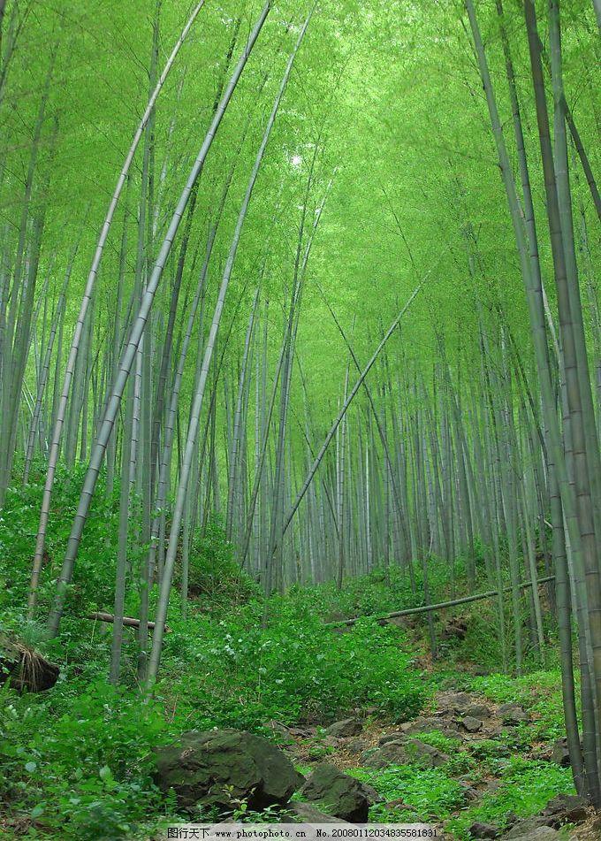竹林深处图片