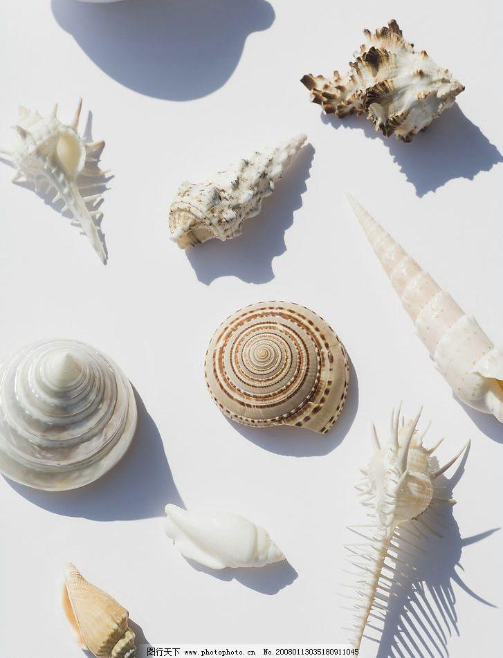 海螺做杯子手工作品