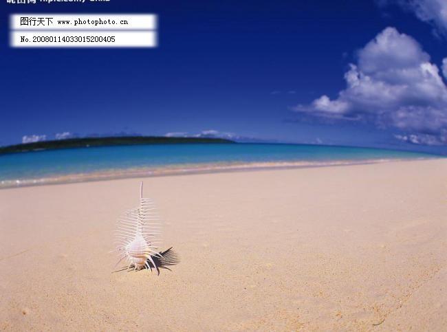 海滩图片免费下载 72 JPG 白云 大海 风景 海螺 海水 海滩 景 其他 滩图片素材下载 海滩 风景 自然景观 自然风光 景 沙滩 大海 海水 兰天 白云 海螺 其他 摄影图库 72 jpg psd源文件 其他psd素材