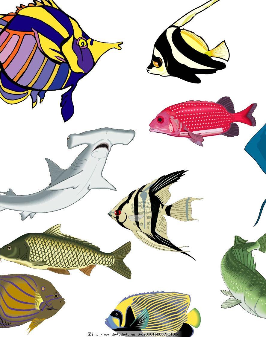 鱼类矢量图图片