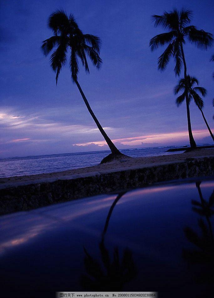 海滩 风景 自然景观 自然风光 景 沙滩 海水 大海 夜景 椰子树 其他