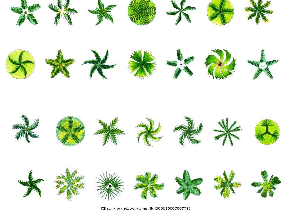 树木平面素材 平面图 园林 绿化 园林设计 园林素材 植物 源文件库