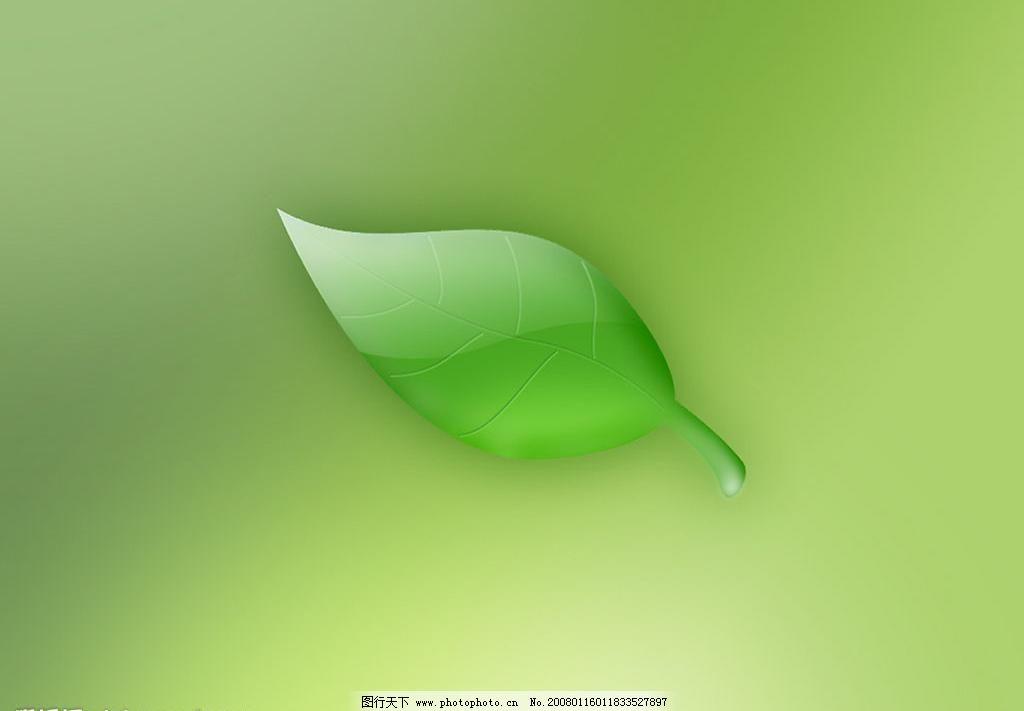 绿色调壁纸图片