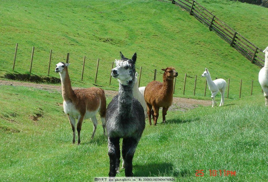 澳大利亚动物图片