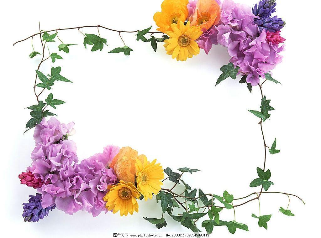 花卉边框 底纹边框 花边花纹