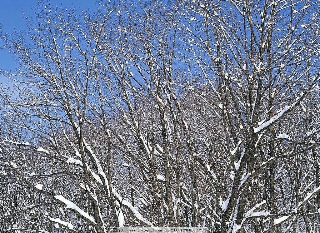 冬天风景 自然景观 自然风景 冬天雪景 摄影图库 72 jpg