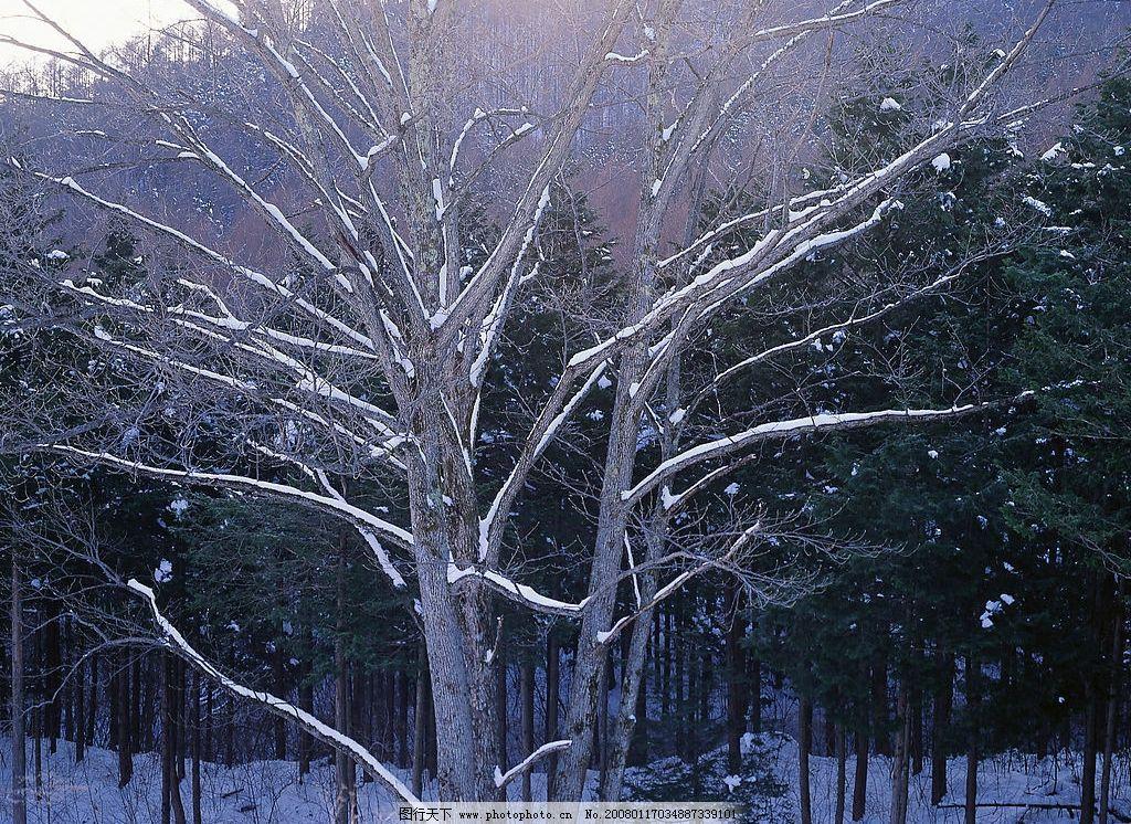冬天风景 自然景观 自然风景 冬天雪景 摄影图库