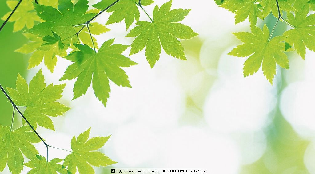 绿色自然树叶底图 自然景观 自然风景 摄影图库 350 jpg