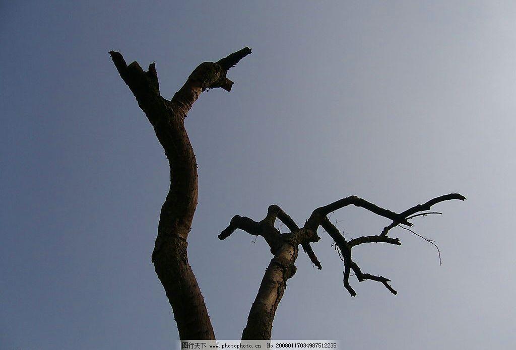 枯腾老树昏鸦 枯树,孤独.