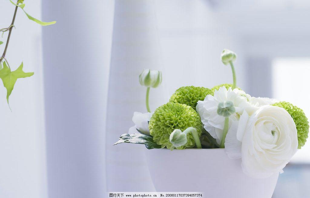 室内鲜花 室内鲜花室内花朵家中绿色室内摆设家中花朵绿色植物家居
