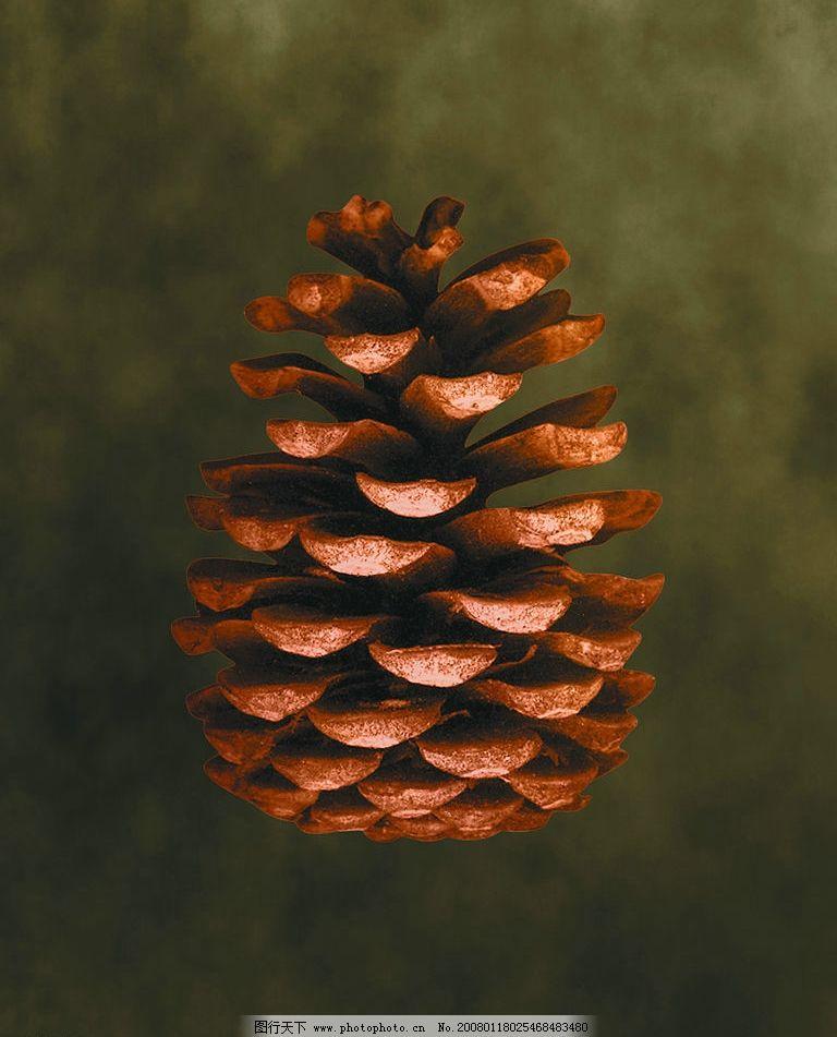 松果 设计素材 背景图片 广告图库 花草植物 生物世界 其他 意.