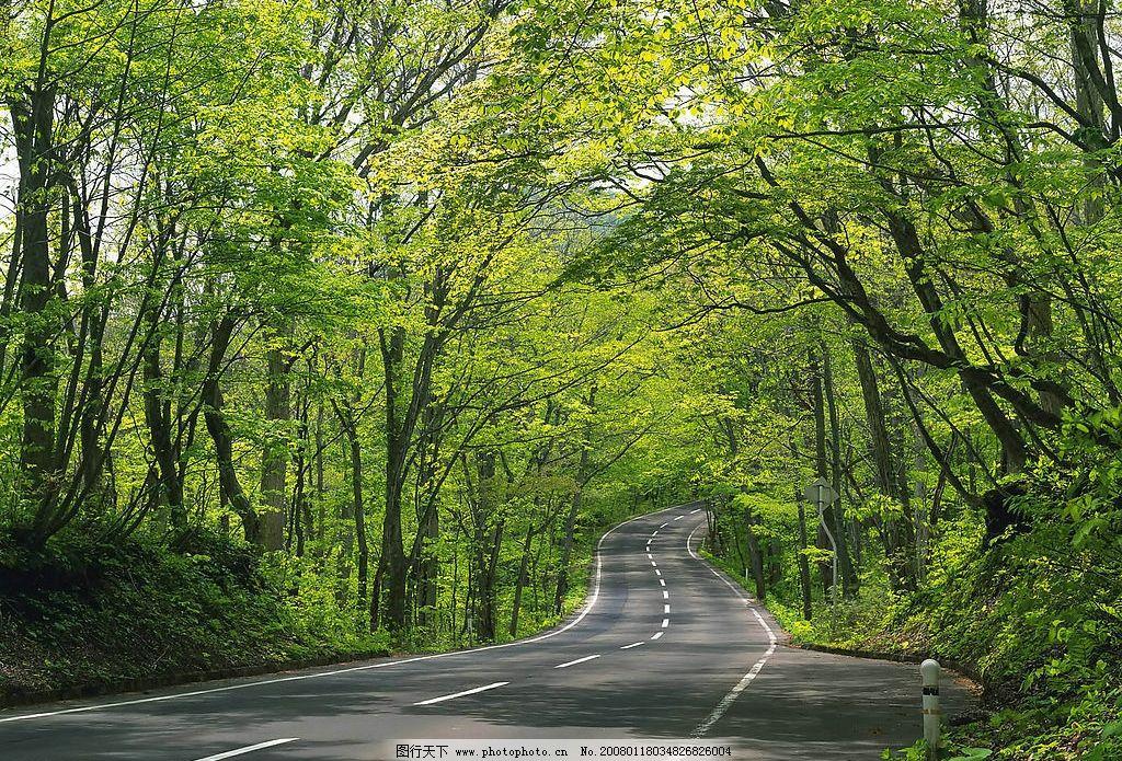 道路 林荫 小路 绿色 自然景观 自然风景 风景 摄影图库 72 jpg