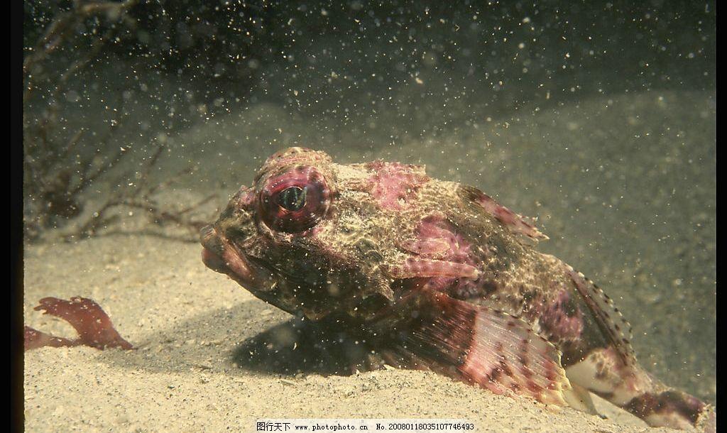 海底动物 鱼类 贝类 珊瑚 珍稀海底动物 摄影图库