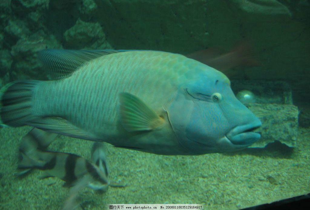 深海鱼 海洋 鱼 海洋动物 生物世界 海洋生物 摄影图库 96 jpg