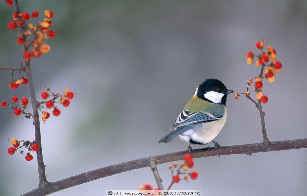 小鸟 小鸟大自然鸟类动物羽毛翅膀 生物世界 鸟类 摄影图库 350 jpg