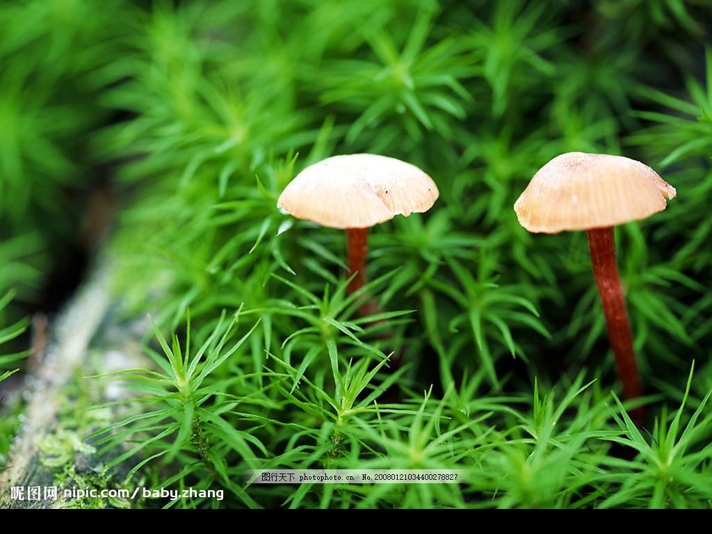 野生菌 绿色 自然景观 山水风景 摄影图库 150 jpg