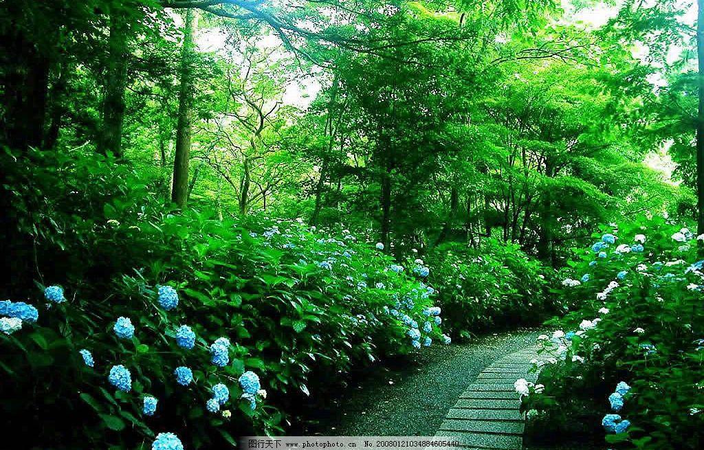 林中小路 宁静 绿色 自然景观 自然风景 摄影图库 150 jpg
