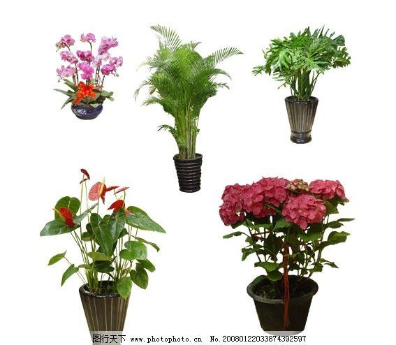 绿植鲜花 绿植 鲜花 其他矢量 矢量素材 矢量图库   eps