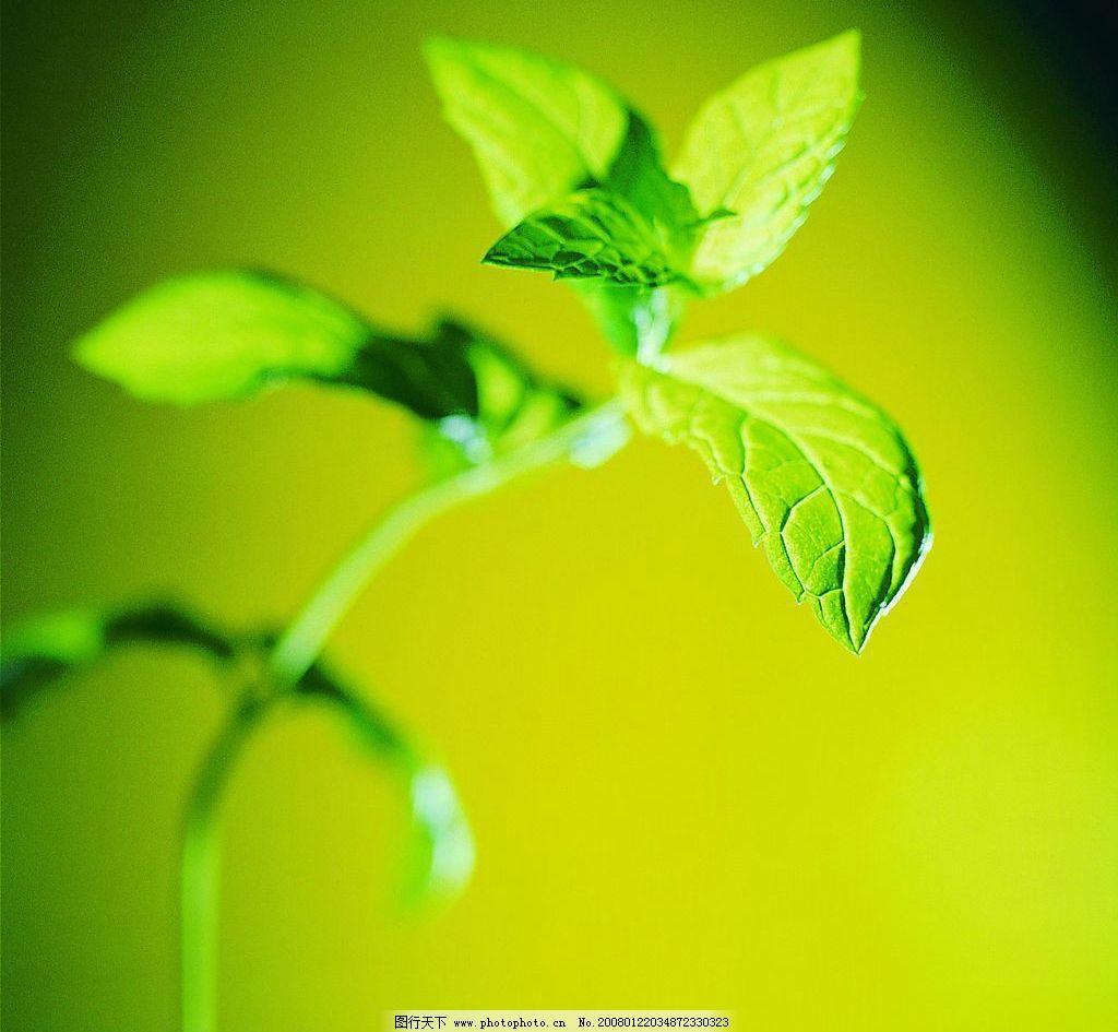 绿色背景叶子 自然景观 自然风景 精美大自然 摄影图库 72 jpg