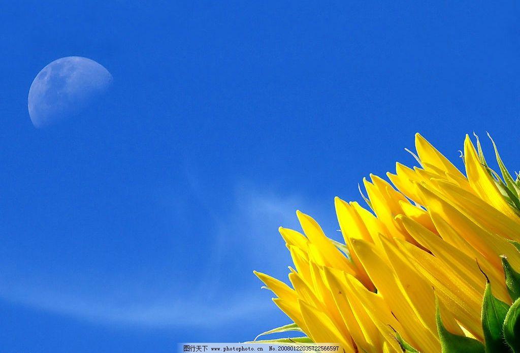 太阳花 蓝天白云 黄花 生物世界 花草 花朵 摄影图库 180 jpg