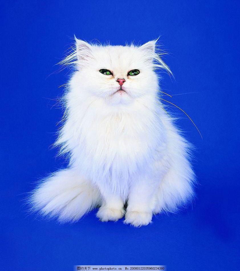 可爱之猫013 动物 宠物 家猫 摄影图库