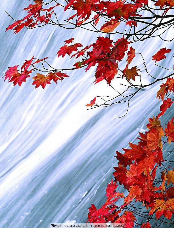 溪水枫叶图片