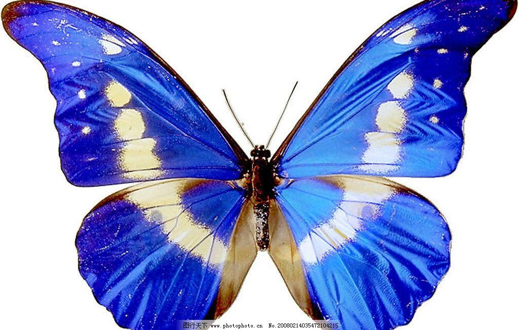 蝴蝶透明flh素材
