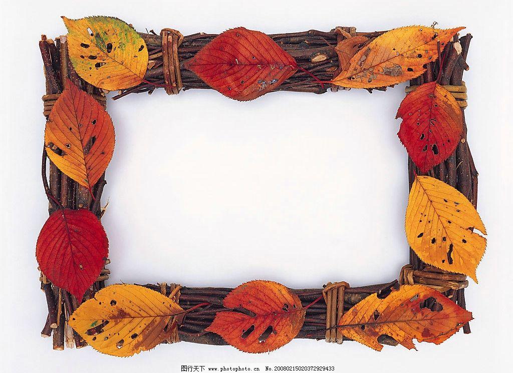 树叶树枝边框图片