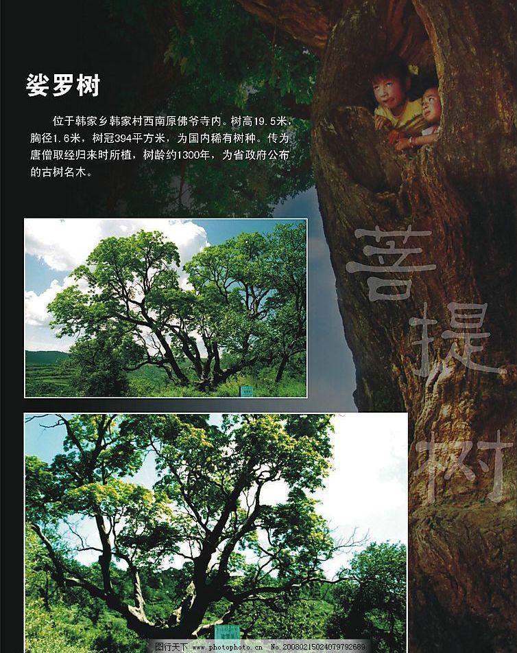 菩提树 自然景观 人文景观 设计图库 150 jpg